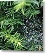 Evergreen Rain Metal Print