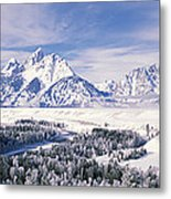 Evergreen Trees On A Snow Covered Metal Print