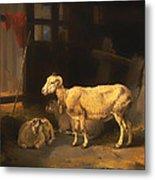 Ewe And Lambs Metal Print