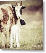 Ewe And Young Metal Print