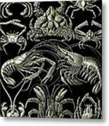 Examples Of Decapoda Kunstformen Der Natur Metal Print