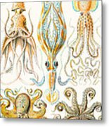 Examples Of Various Cephalopods Metal Print