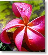 Exotic Beauty Metal Print