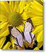 Exotic Butterfly Metal Print