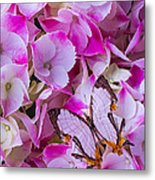 Exotic Butterfly On Hydrangea Metal Print