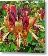 Exotic Flower Metal Print