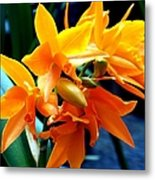 Exotic Orange Metal Print
