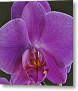 Exotic Orchid 2 Metal Print