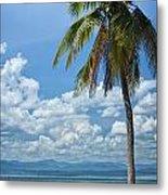 Exotic Palm Tree Metal Print