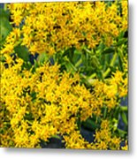 Exploring Goldenrod 6 Metal Print