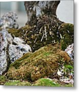 Exposed Roots Metal Print