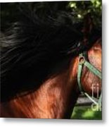 Expresso And The Wind Metal Print