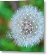 Extra Little Dandelion Wish Metal Print