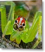 Extreme Macro Of A Spiders Face Metal Print