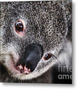 Eye Am Watching You - Koala Metal Print