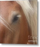 Eye Of A Belgian Horse Metal Print