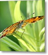 Eye Of The Butterfly Metal Print