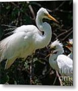 Eye Of The Egret Metal Print