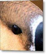 Eye Of The Gander Metal Print