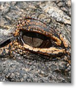 Eye Of The Gator Metal Print
