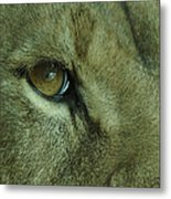 Eye Of The Lion Metal Print
