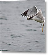 Eye Of The Seagull Metal Print