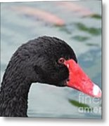 Eye Of The Swan Metal Print