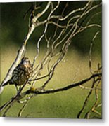 Eye On The Sparrow Metal Print