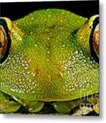 Eye-ringed Bushfrog Metal Print