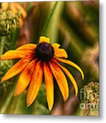 Eye To The Sun Metal Print