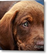 Eyes Are The Window To The Soul Metal Print by Mary Lou Chmura