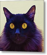 Eyes Metal Print by Hazel Billingsley