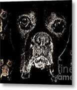 Eyes In The Dark Metal Print