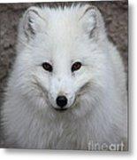 Eyes Of The Arctic Fox Metal Print