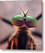 Eyes Of The Robber Fly Metal Print