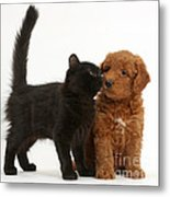 F1b Goldendoodle Pup With Kitten Metal Print