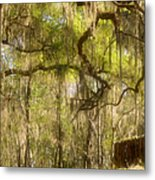 Fabulous Spanish Moss Metal Print by Christine Till