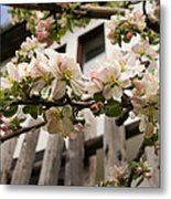 Facades And Fruit Trees Metal Print