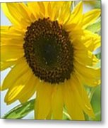 Face To Face With A Sunflower Metal Print