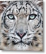 Faces Of The Wild - Snow Leopard Metal Print