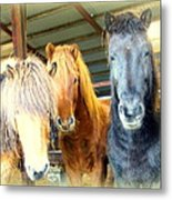 The Furry Trio Facing Me Again  Metal Print