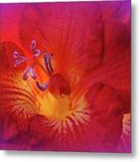 Fade To Freesia - Iridaceae Metal Print