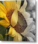 Faded Sunflower Metal Print