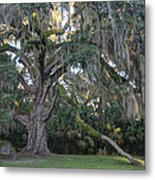 Fairchild Oak With Sunbeam Metal Print