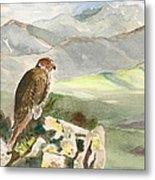 Falcon Metal Print