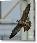 Falcon Flying By Tower Metal Print