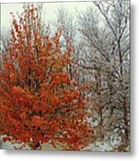 Fall And Winter 2 Metal Print