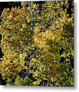 Fall Aspen Metal Print