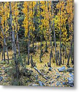 Fall At The River Metal Print