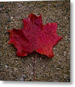 Fall Metal Print by BandC  Photography
